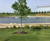 Retention basin at Eaton Corporation