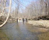 Fish seining in Jennings Woods - KSU.