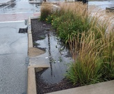 A bioretention cell takes water from the street during the Labor Day storm.