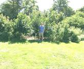 Forest Farmer with big trees removed and persimmons improved.