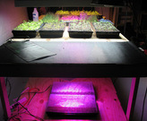 Germination Station:  One and Four-tray heat mats in plain view